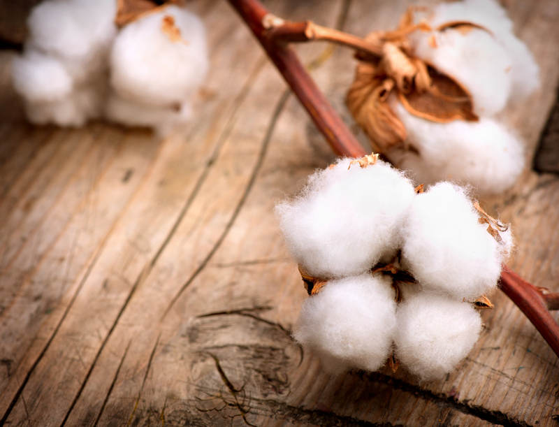 Biobaumwolle, Hanf, Leinen oder Viskose? Welche Faser ist am besten geeignet für Socken?